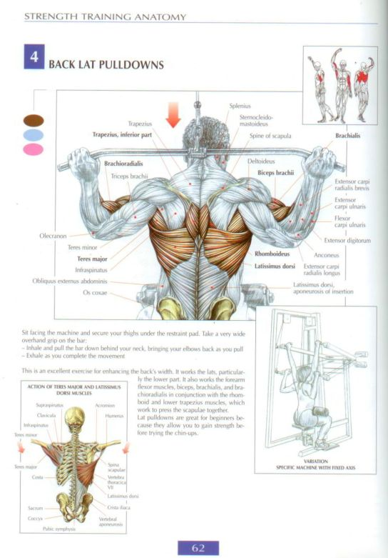 Strength Training Anatomy | The Key Point